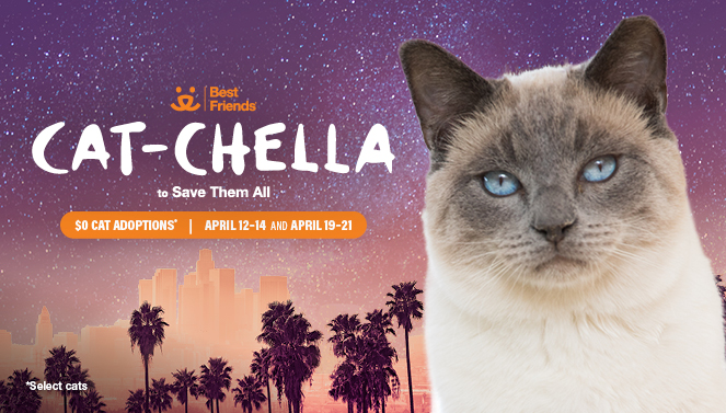 Join Us For Cat Chella Best Friends Animal Society Los Angeles