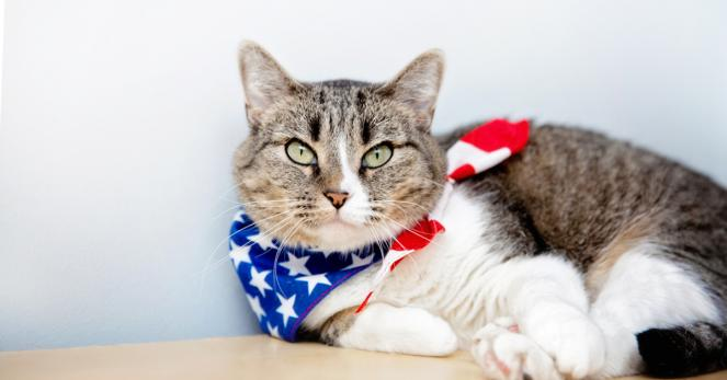 Best Friends Animal Society Offers July 4th Safety Tips and $17.76 Adoptions to Help Pets Over Holiday