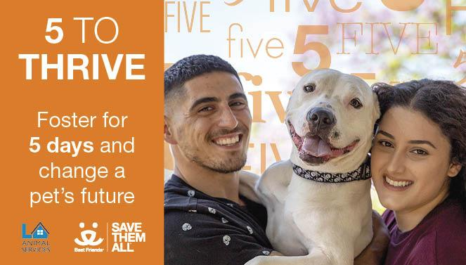 5 To Thrive Best Friends Animal Society Los Angeles