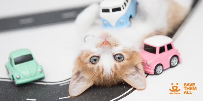 kitten drive thru adoption event