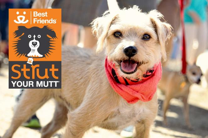 Dog at Strut Your Mutt in L.A.