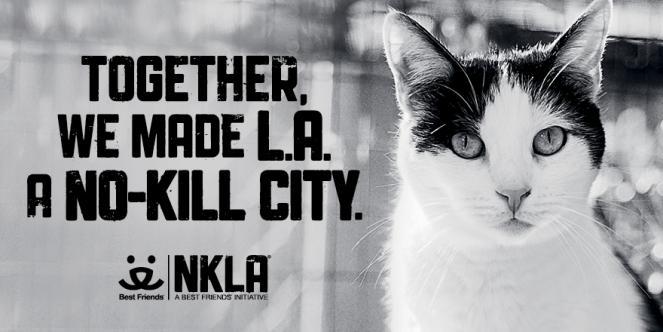 NKLA - Cat