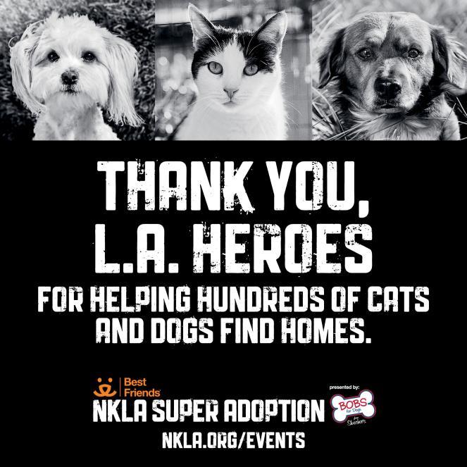 NKLA super adoption