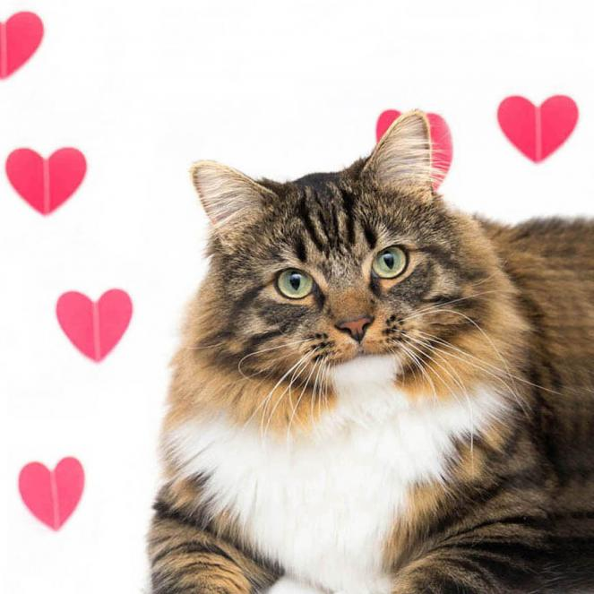 Best Friends Animal Society offers $20 pet adoptions  in Los Angeles from Feb. 1-14