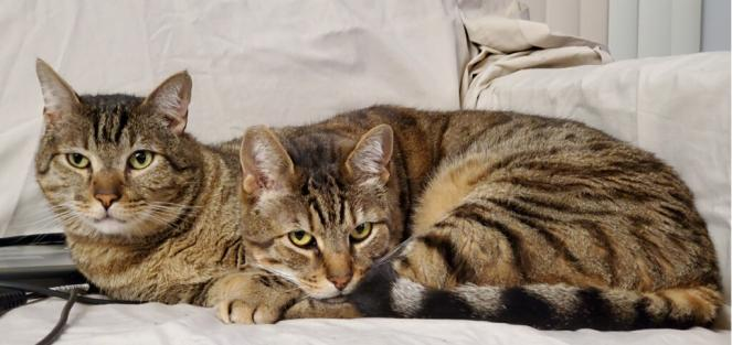 hance (L) and Barclay (R) are two cats that had their adoption fees paid during Best Friends Animal Society's Pay It Forward cam