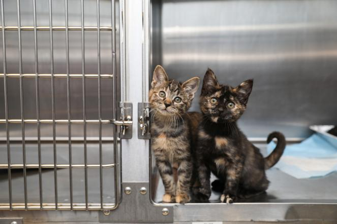 California Animal Welfare Funders Collaborative awards $200,000 in grants to animal shelters across the state