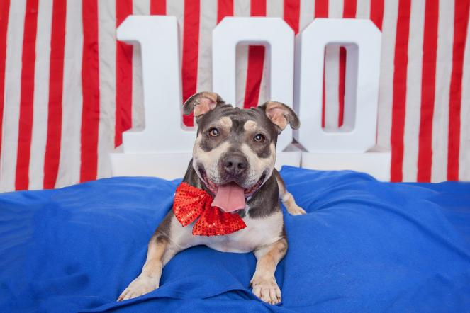 Best Friends & Los Angeles Animal Services Partner to Offer $10 Adoptions  and Tips  to Keep Pets SafeThroughout the Holiday