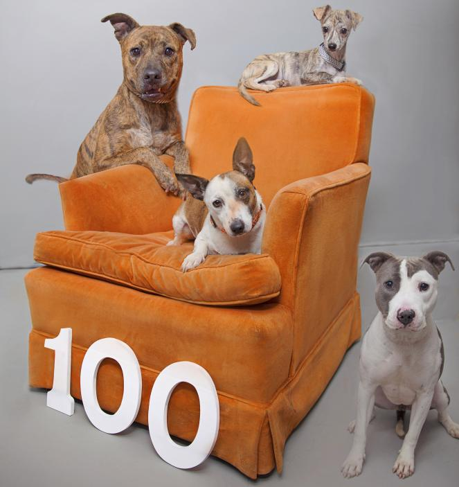 Dogs on an orange chair