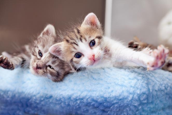 Two kittens in a cat bed