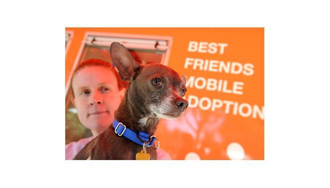 Volunteer Michelle Bridges with a dog