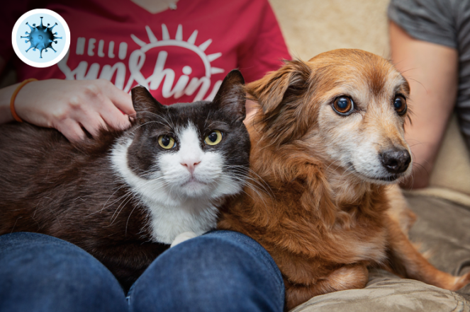 Support Los Angeles Shelters And Rescue Groups Amidst Covid 19 Best Friends Animal Society Los Angeles