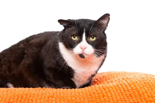 Cat charms adopters from way more than six feet away