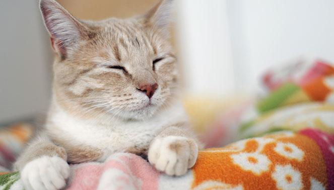 Debunking the myths of FIV