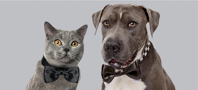 Best Friends Animal Society to Crown Senior Prom King & Queen