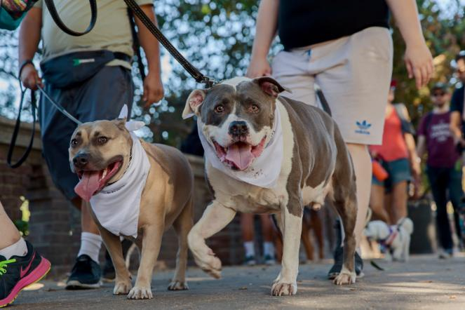 LA's largest fundraising dog walk returns to Exposition Park on October 20