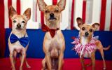 Three dogs dressed up for the Fourth fo July