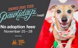 Zappos.com & Best Friends Animal Society Team Up to Save 9,000 Lives Over Holiday Weekend