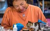 volunteer kitten feeding sophia