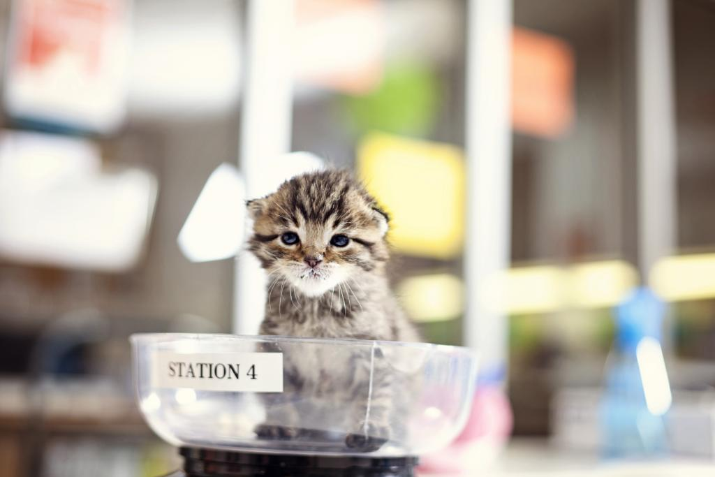 Kittens are weighed daily.