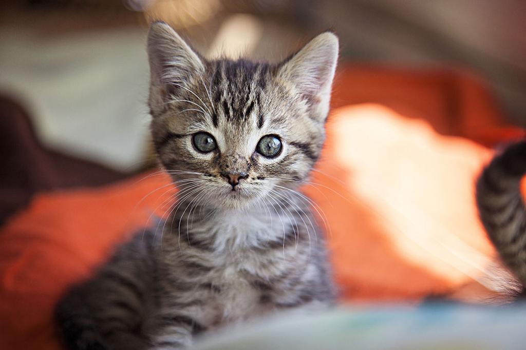 Life-saving kitten nursery at Best Friends Pet Adoption Center.